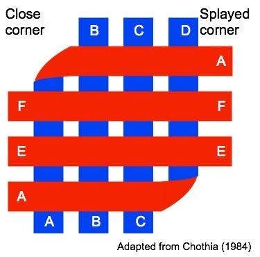 Schematic view of beta-sandwich, adapted from Chothia (1984)